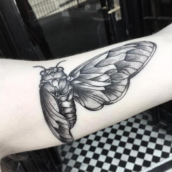 Tatouage bras dotwork papillon de nuit par sacred art tattoo - Tatouage papillon de nuit ...