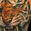 Arm Realistic Tiger tattoo by Club Tattoo