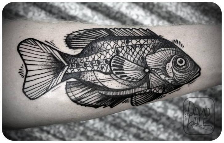 Arm Fish Tattoo by David Hale