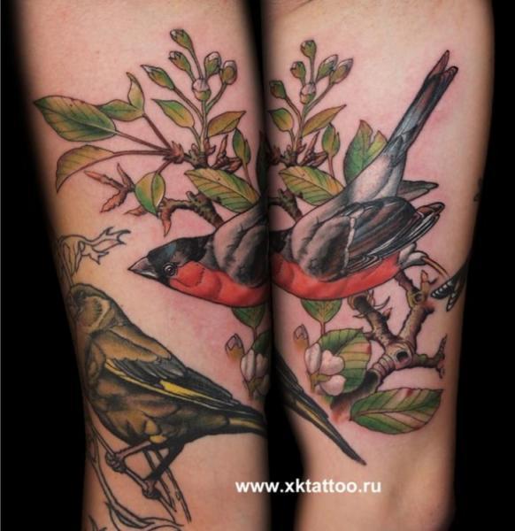 Tatuaggio Braccio Realistici Uccello di XK Tattoo