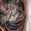 Arm Realistic Cat tattoo by Tantrix Body Art