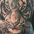 Arm Realistische Tiger tattoo von Tattoo Nero