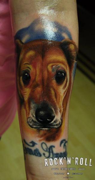 Arm Realistische Hund Tattoo von Rock n Roll
