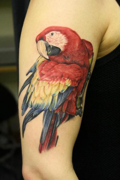 Schulter Realistische Papagei Tattoo von Rock n Roll