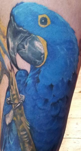 Realistic Parrot Tattoo by Inky Joe