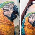 Shoulder Realistic Parrot tattoo by Powerline Tattoo