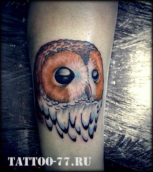 Arm Realistic Owl Tattoo by Tattoo-77