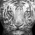Realistic Back Tiger tattoo by Heart of Art